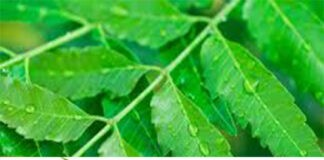 Neem-Leaves-That-Work-Like-Magic